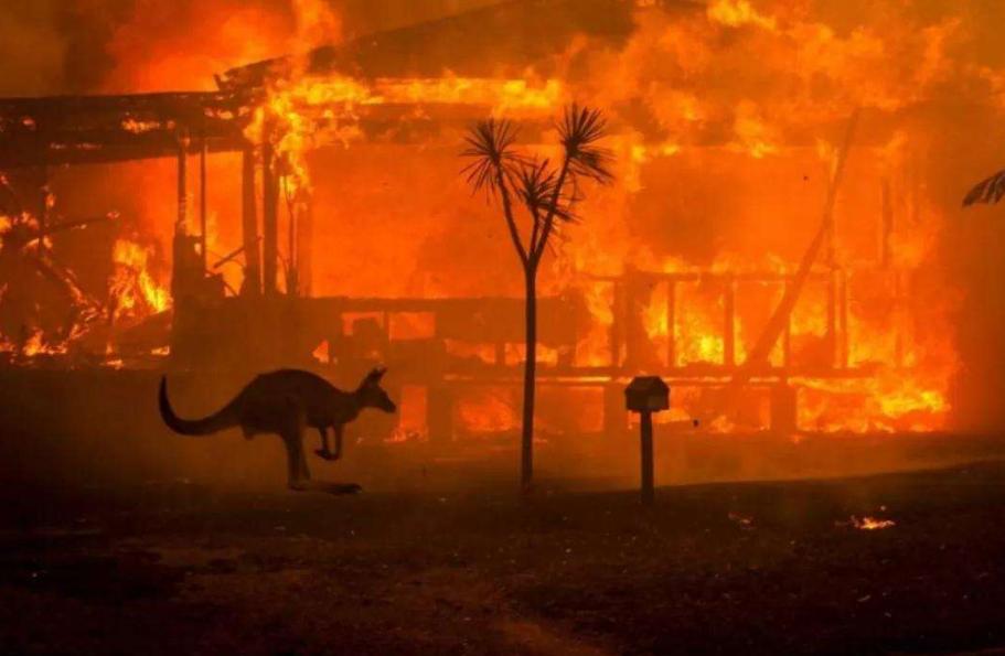 澳大利亚的森林大火,导致多种动物面临灭绝的危险,政府启动紧急干预措施