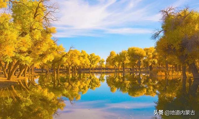 致敬|内蒙古额济纳-大漠胡杨林景区对全国医护工作者免费开放