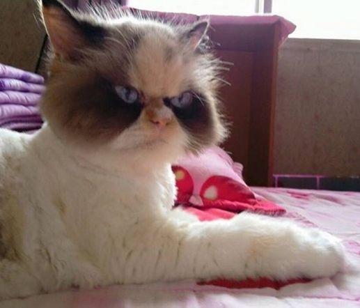 猫整天摆臭脸被抛弃,现任主人带她回家后,得到上万人喜欢!