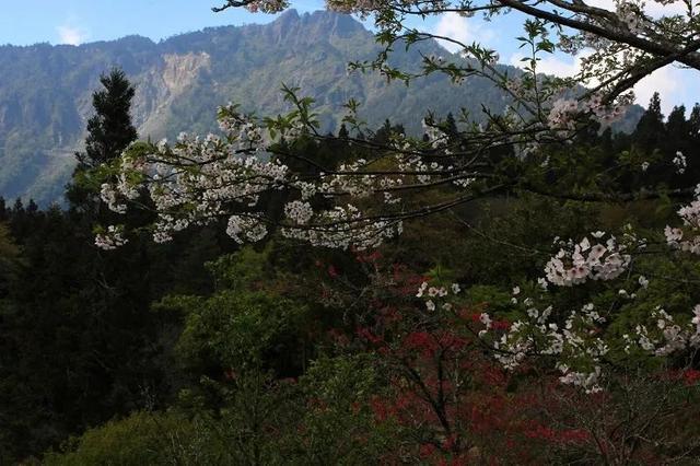 花季播报:正是春花烂漫时,樱花、杜鹃、桃花......你独爱哪个?