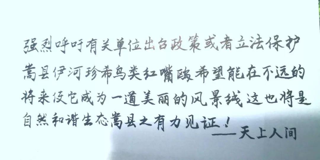 【关注】倡议书!强烈呼吁保护嵩县伊河红嘴鸥!有爱的人转起!