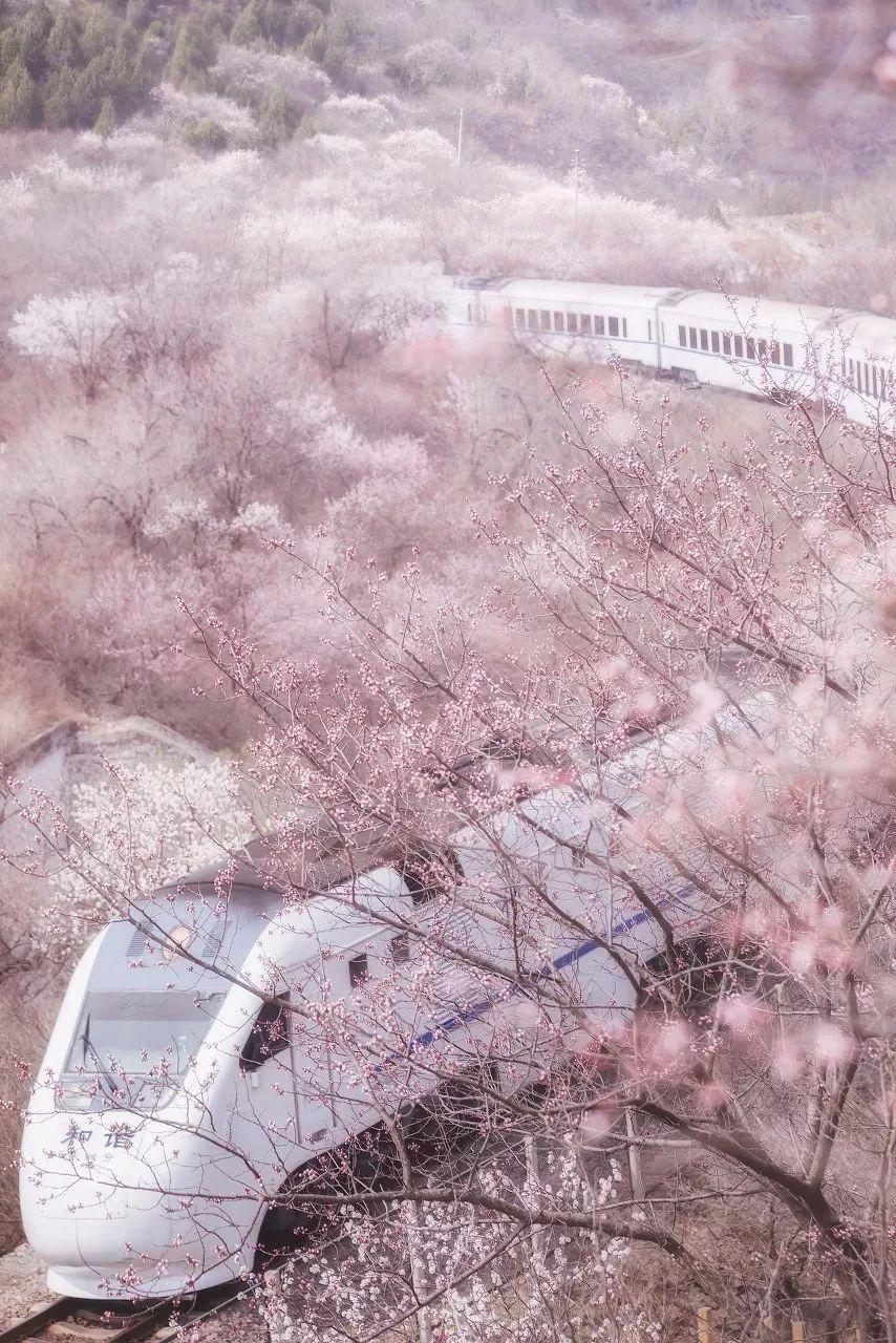 德孝中华周刊推荐:等疫情结束就去踏春赏花