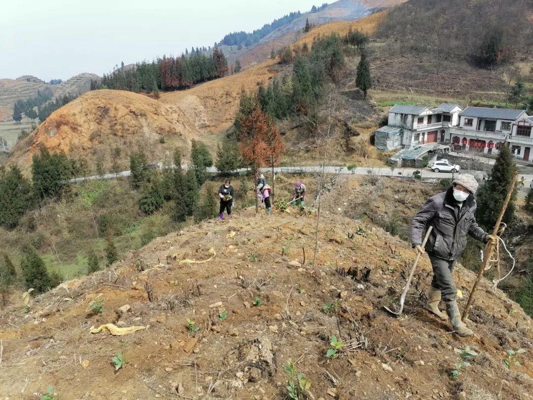 珠藏镇人口_珠藏镇地图 珠藏镇卫星地图 珠藏镇高清航拍地图 珠藏镇高清卫星