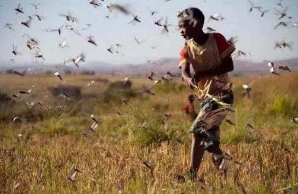 原创            疫情之外,南极气温超20℃,4000亿只蝗虫入侵:我们的地球怎么了?