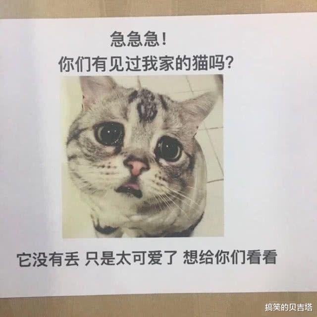 爆笑动图:这样秀自己家的猫,不怕被偷啊!
