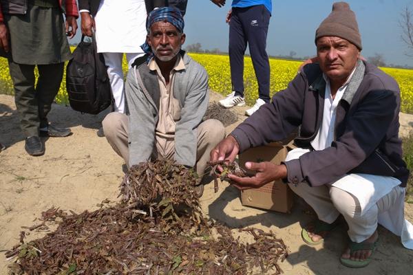 沙漠蝗洗劫东非南亚恐酿粮食危机,专家:可收集蝗虫做干粉