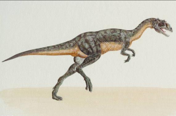 它是最快的恐龙,霸王龙遇到它只能望风而逃!堪称恐龙杀手!