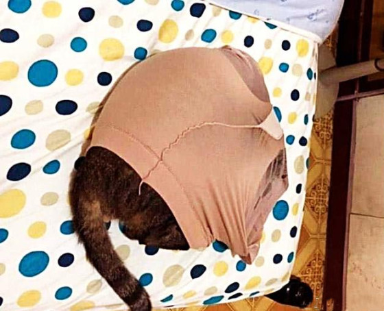 原创            女子发现裤袜找不到了,特地提前下班回家破案,一推门血压升高
