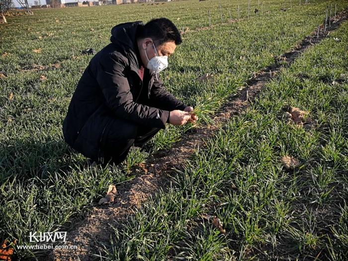 河北:小麦长势良好 各地开启春耕备播物资准备