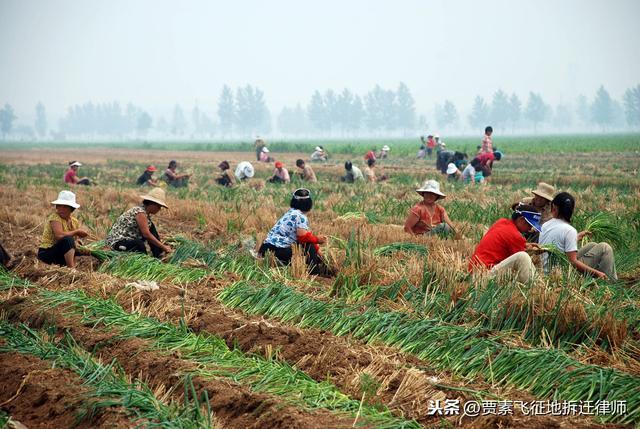 十亩地的玉米,每斤8毛4分钱,算完账后,我强烈建议父母不要种地