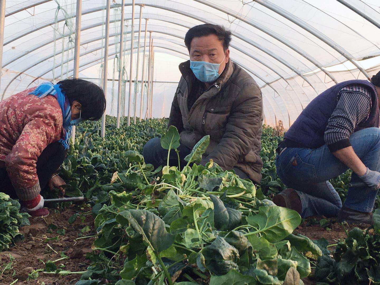 """山西运城残疾青年农民马立鹏为抗""""疫""""捐赠价值1.5万余元蔬菜"""