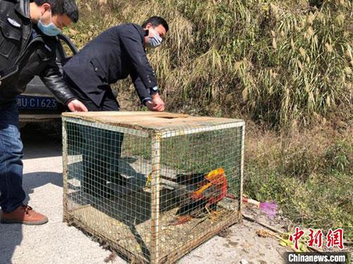 湖南湘西侦破一起非法猎捕珍贵濒危野生动物案
