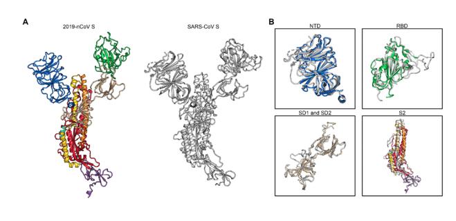 搜狐医药|新冠病毒为何传染性强?美专家称其受体结合力是SARS的10至20倍
