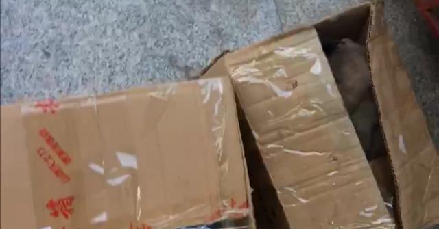 原创            早晨宠物店门口放了2个纸箱,又是几只被抛弃的中华田园犬