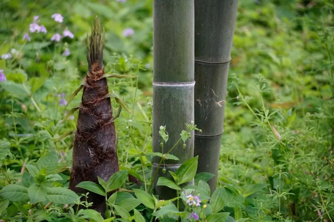 原创            诗词里的江南美味:试寻野菜炊香饭,便是江南二月天。