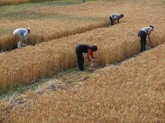 原创            农村七八十年代真实生活,值得回忆