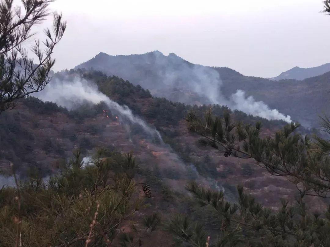 甘肃一地突发森林火灾 消防队伍