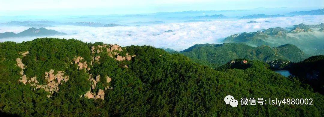【人大专项评议】鲁山省级自然保护区(淄博市鲁山林场)野生动物保护名录——鸟类