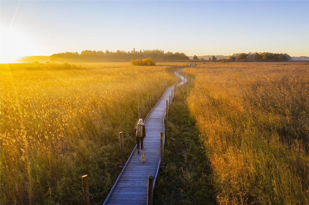 走进自然的小路——赫尔辛基自然保护区森林步道