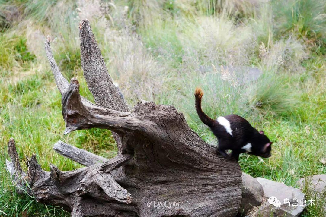 鸟兽见丨生物多样性探索分享计划