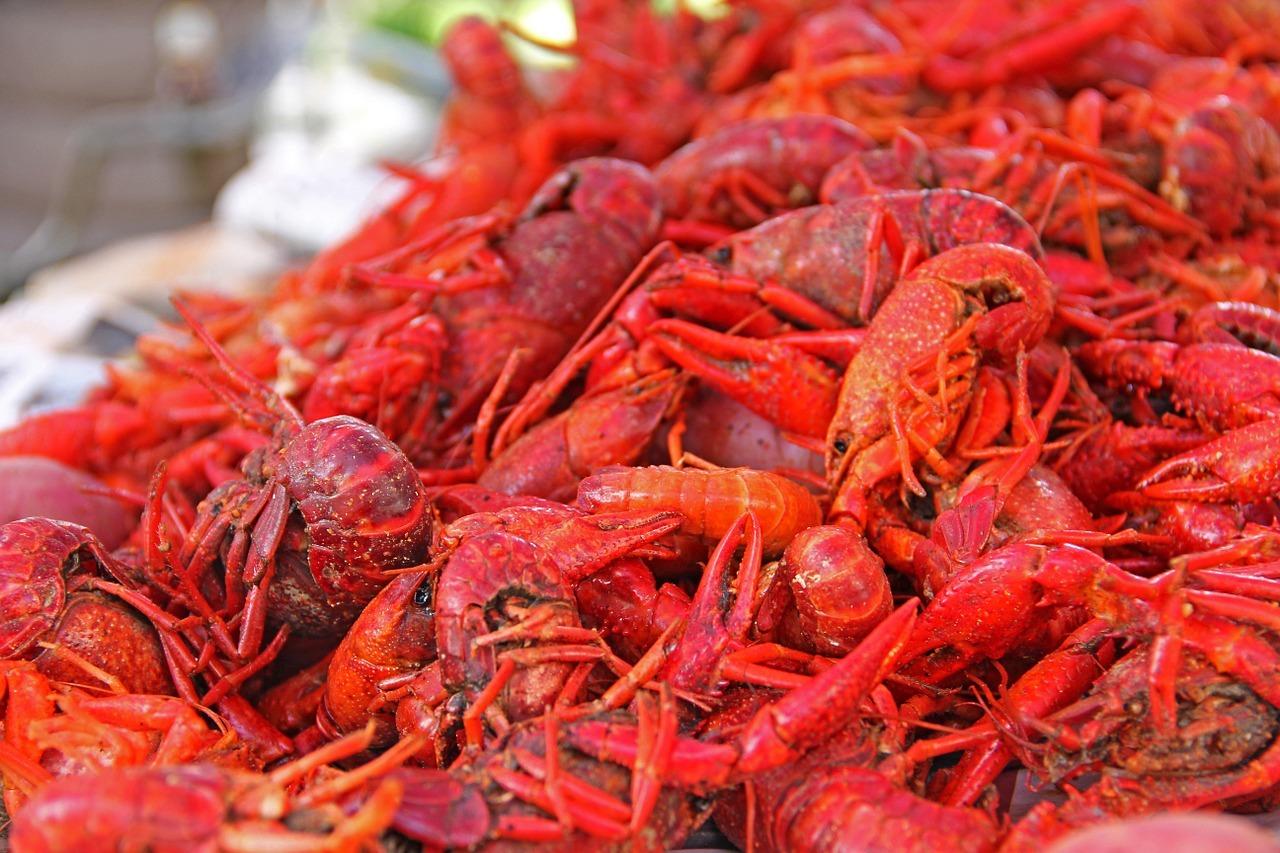 2019年全国小龙虾五成产能在湖北,今年要没小龙虾吃了吗?