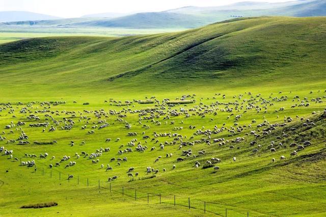 内蒙古gdp增速_上半年湖北GDP增长28.5%,内蒙古增长10.4%,四川和贵州增长12.1%