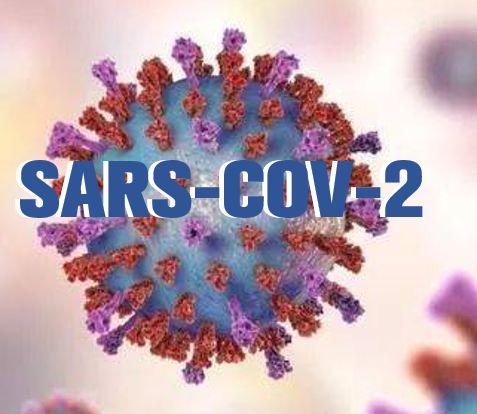 中国学者呼吁为新冠病毒