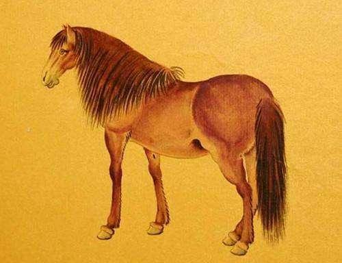 无量子:十二生肖属马的人2020年运势及运程图片