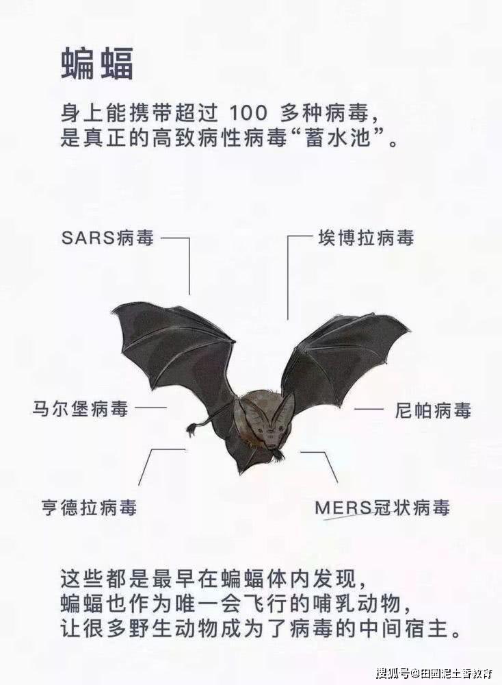 美国疾病生态学家最新研究:蝙蝠携带新冠病毒可能直接感染人,无需经中间宿主