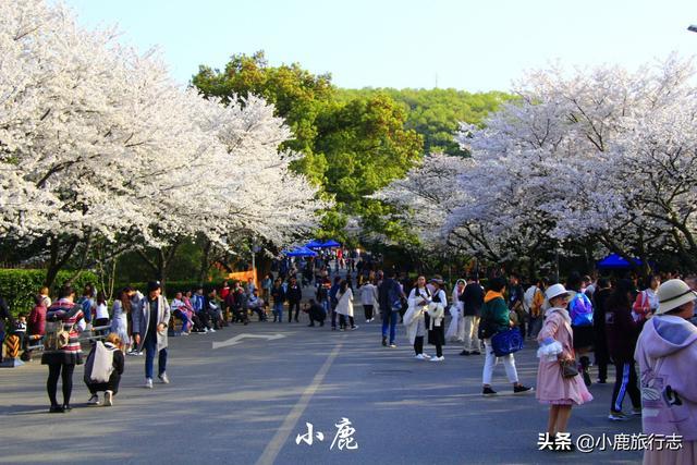 再有一个月,武汉将蜕变成连上帝也来度假的城市