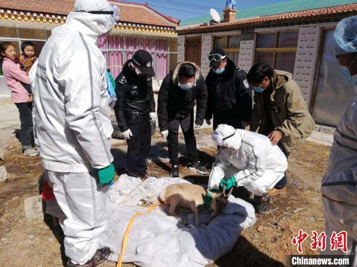青海达日森林公安成功救助国家二
