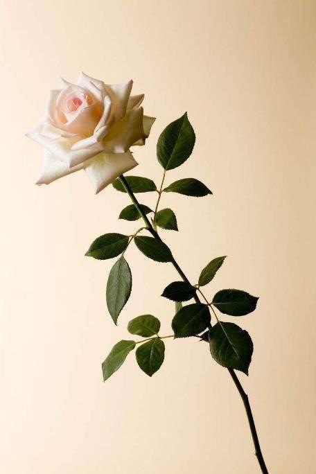 心理学:选出你最喜欢的一朵花,测凭你的魅力指数能俘获到男神吗