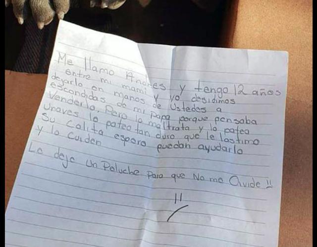 原创             一只狗被弃养在收容所门口,但看完里面的信后,工作人员却感动了