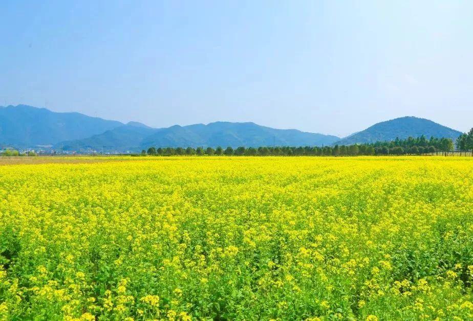 一场属于你的疗愈之旅!春暖花开时,请务必到象山深呼吸!