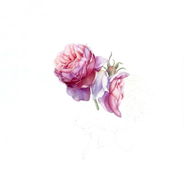 零基础水彩花卉教程 分步骤图解教你画水彩花卉,简单易学,收藏