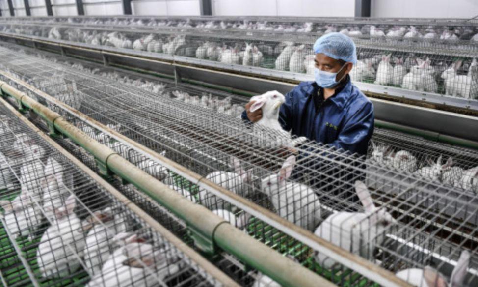 通过!全面禁止非法野生动物交易!人工饲养的能吃吗?禁食界限在哪?权威回应来了