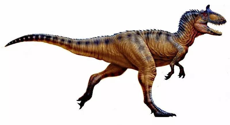 你可以去百度百科搜索一下恐龙名称,里面有权威的资料和图片:地震龙图片