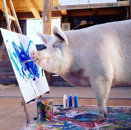 猪都成艺术家了!外国一头猪设计了一个红酒酒标