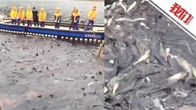 千岛湖第一网鱼半价义卖 将购置医疗物资赠一线