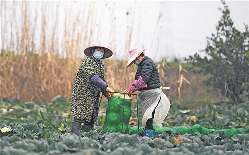 無疫情鄉村不誤農時忙春耕丨來自湖北春耕一線的報道