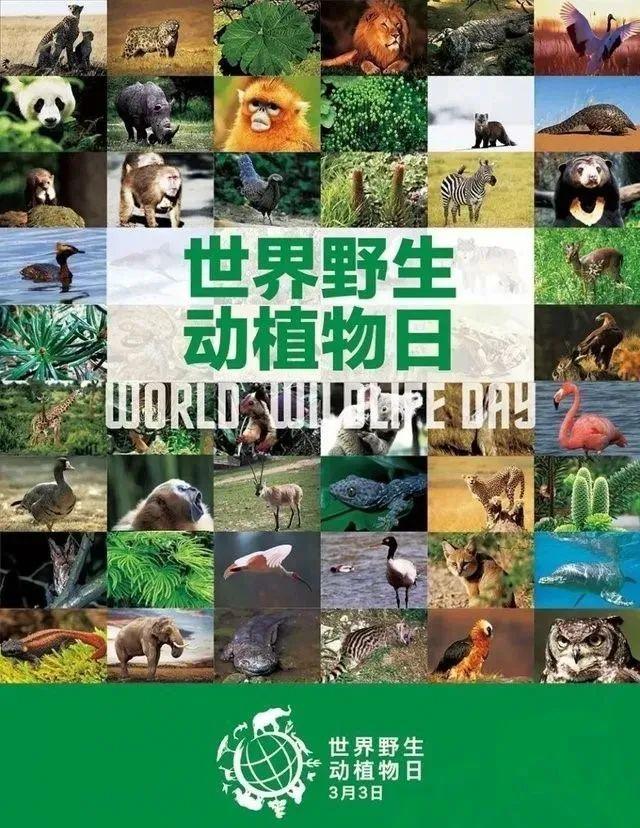 维护全球命运共同体!保护野生动植物都江堰在行动!