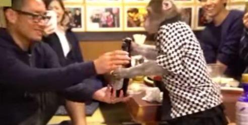原创 日本居酒屋招揽生意,猴子变身服务生,给客人拿酒递热毛巾