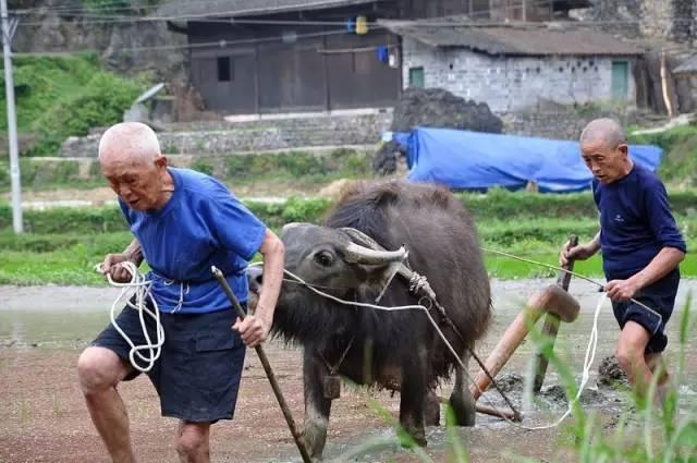 我国农村老年人现状_衡山将来谁来种田?农村的现状触目惊心!_中国