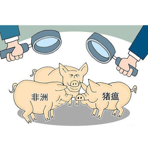 农业农村部通报非洲猪瘟疫情 扑杀324头生猪疫情总体趋缓
