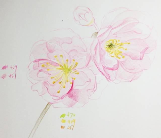 教程 十五分钟学会画彩铅樱花