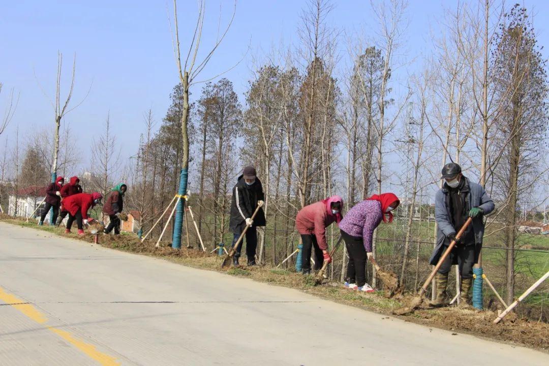 投资6000万,滁州这一地绿化工程即将完工!