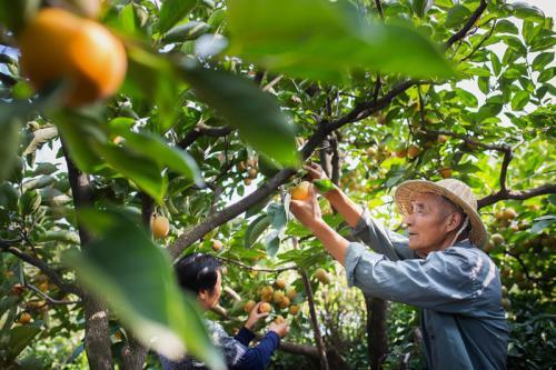 你认同农业电商联盟助力家庭农场综合能力提升是一个很好尝试吗