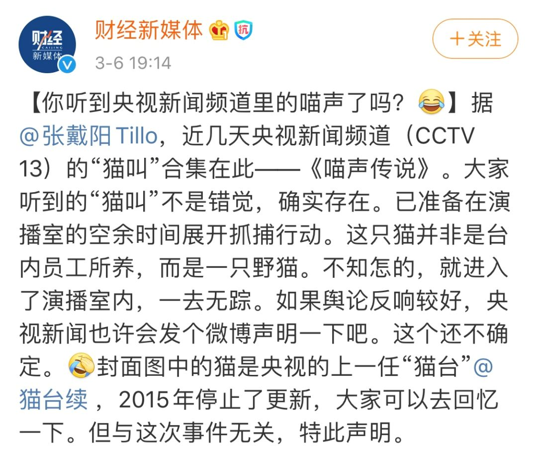 """【新闻】暖心大结局:央视""""新闻猫""""来找领养啦!"""