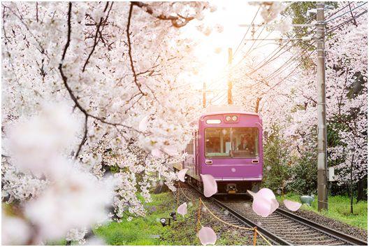 许愿樱花季!让你最爱的游戏c位出道!_活动