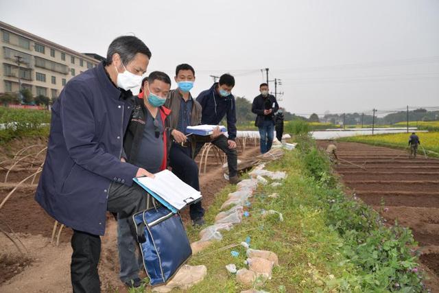 泸县集中展示评价123个水稻选育品种